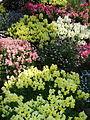 Flower-center141315.jpg