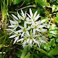 Flower (2477106368).jpg