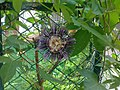 Flower in Trinity garden.jpg