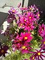 Flowers - Fiori (21472663434).jpg