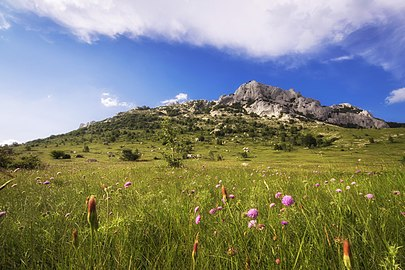 Flowers at Velebit.jpg
