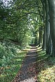 Footpath in October - geograph.org.uk - 1056496.jpg