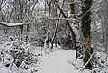 Footpath in the snow through the woods, Tunbridge Wells Common - geograph.org.uk - 1149497.jpg