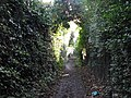 Footpath through the allotments - geograph.org.uk - 1591094.jpg