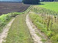 Footpath to Remenham - geograph.org.uk - 536862.jpg