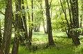 Forêt dans tourbière à Baerenthal 57230 Moselle - France.jpg