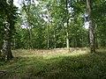 Forêt de Mormal - Nerviens 02.jpg