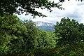 Forest @ Roc de Chère @ Talloires (34836762043).jpg
