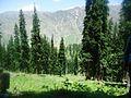 Forest of Lalazar.jpg