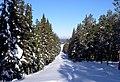 Forest path on Frösön - panoramio - Lars Falkdalen Linda….jpg