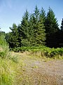 Forestry Road Junction, Cairn Edward Forest. - geograph.org.uk - 532750.jpg