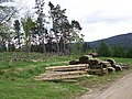 Forestry near Enochdhu - geograph.org.uk - 829139.jpg