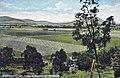 Freestone Creek (near Warwick) Queensland, Australia - circa 1910.jpg