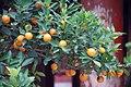 Fruit Bonzai (148437981).jpeg
