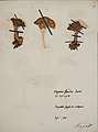 Fungi agaricus seriesI 060.jpg