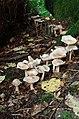 Fungi and lichen (14973097490).jpg