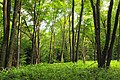 Gallery Forest (9456673634).jpg