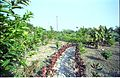 Garden - Science City - Calcutta 1996-December 919.JPG