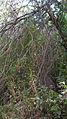 Garden Way - Wall - trees - streamlet - 17 Shahrivar st - Nishapur 16.JPG
