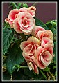 Gardens by the Marina Bay - Dome Flowers-08 (8323773392).jpg
