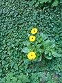 Gardens in Baghdad 5.jpg
