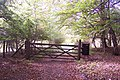 Gate in King's Wood - geograph.org.uk - 1543698.jpg