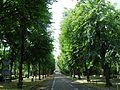 Gdańsk ulica Narutowicza.JPG