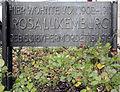 Gedenktafel Cranachstr 58 (Schö) Rosa Luxemburg.jpg