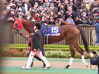 Gentildonna Japanese-bred Thoroughbred racehorse