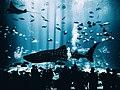 Georgia Aquarium, Atlanta, United States (Unsplash).jpg