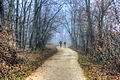 Gfp-wisconsin-madison-people-walking-into-misty-forest.jpg