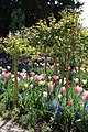 Giverny, Fondation Claude Monet, jardin7.jpg