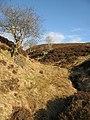 Glenskelly Burn - geograph.org.uk - 1770422.jpg