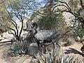 Goat - panoramio (3).jpg