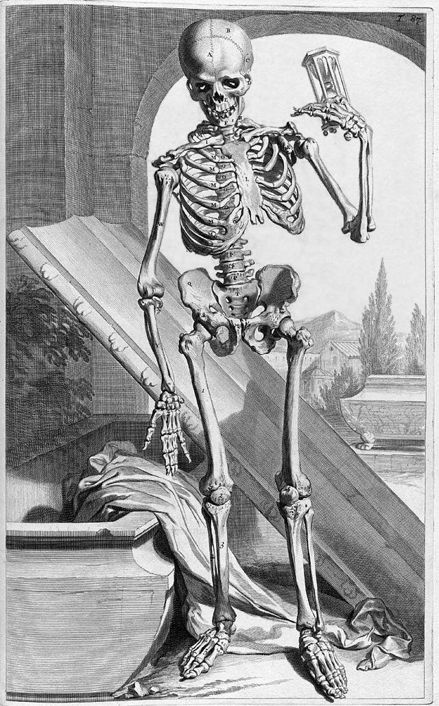 Knochen des Menschen - Wikiwand