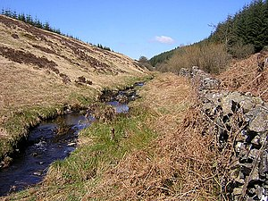 Gowk stane - The Gowkstane Burn Forest of Ae