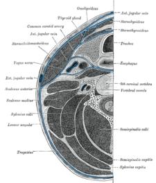 Modře ohraničený spatium retropharyngeum