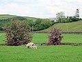 Grazing land at Auchenage - geograph.org.uk - 484332.jpg