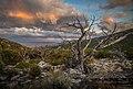 Great Basin National Park.jpg