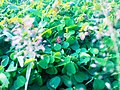 Green003.jpg