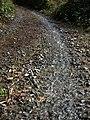 Green lane as stream bed - geograph.org.uk - 1159795.jpg