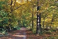 Greutterwald im Herbst.jpg