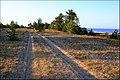 Grey Dune - panoramio.jpg