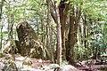 Gulaga-Pinkwood & Syenite.jpg