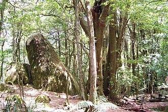 Mount Gulaga - Image: Gulaga Pinkwood & Syenite