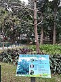 HK 中環 Central 遮打花園 Chater Garden flora green leaves n trees March 2020 SS2 29.jpg