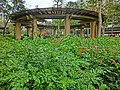 HK Hung Hom South Road Rest Garden 紅磡南道休憩花園 green plant view Pavillion Mar-2013.JPG
