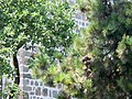 Hagia Sophia (Trabzon, Turkey) (27813763033).jpg