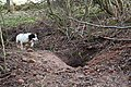 Happening upon a badger sett by Boghole Farm. - geograph.org.uk - 314270.jpg