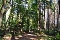 Headley, Surrey, Costal wood.jpg